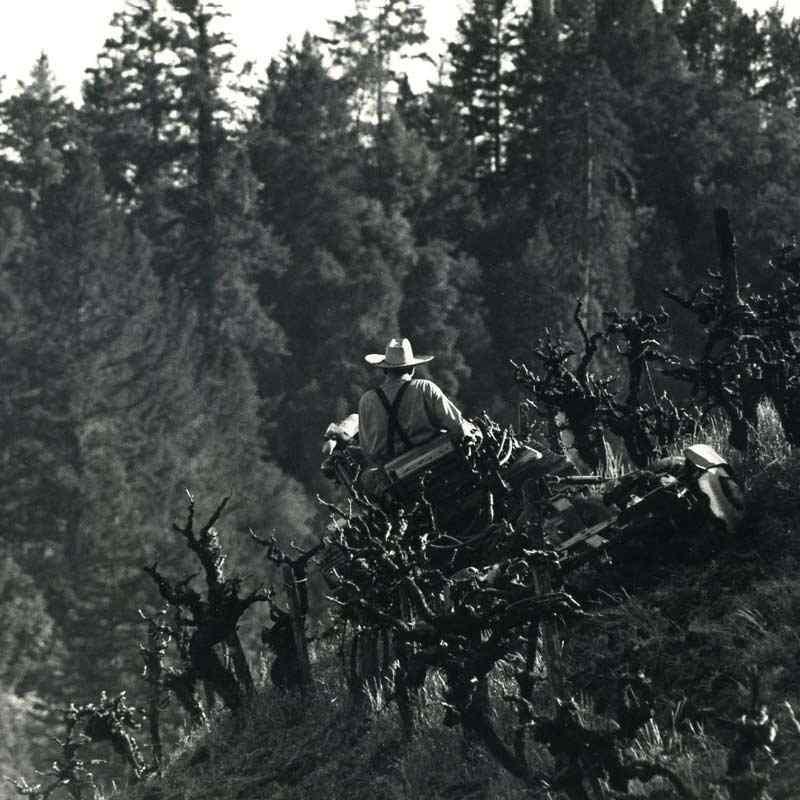Leno Martinelli Farming Jackass Hill 1950's