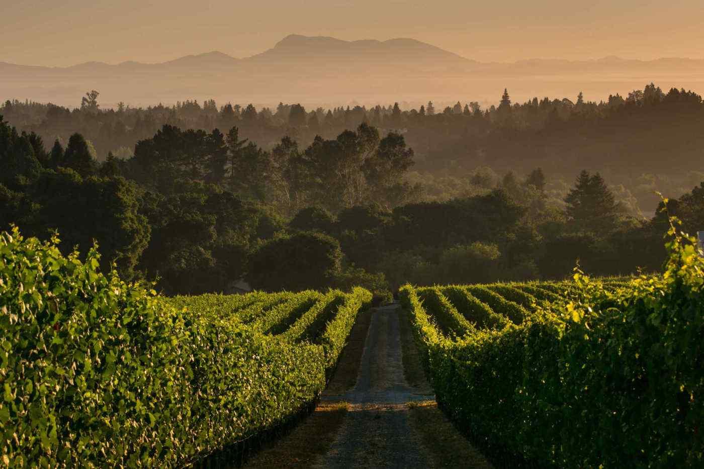 Bondi Home Ranch Vineyard